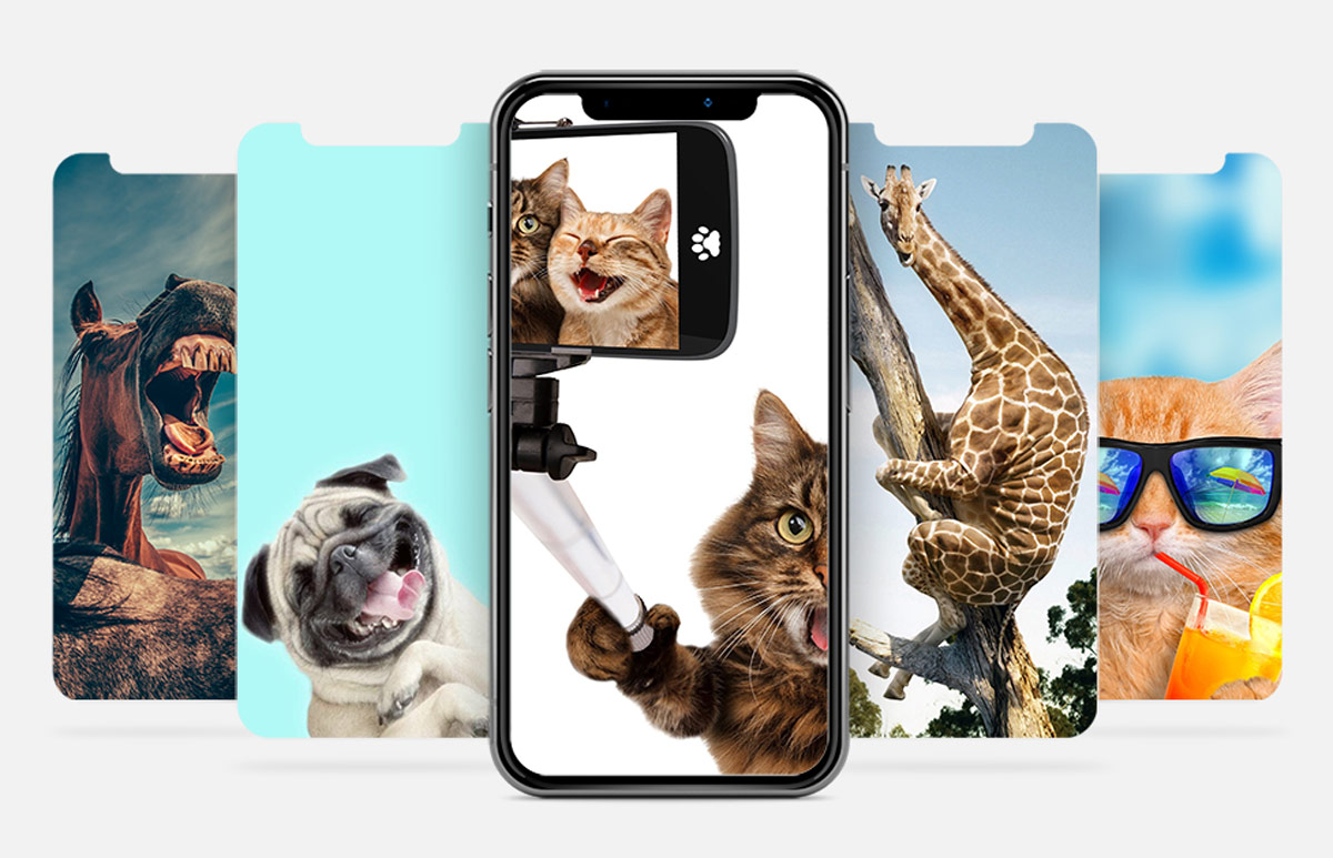 Wallpaper of the week: Funny animals